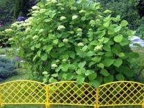 Забор декоративный 6 плетёнка забор